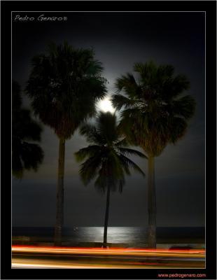 20080629131228-img-9786-luna-llena-.jpg