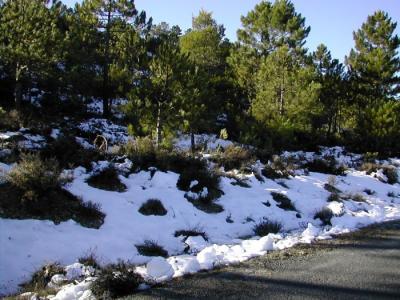 20081126141627-murcia-con-nieve.jpg