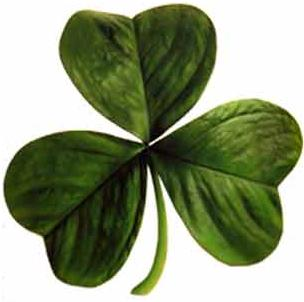 20100317154005-irish-clover.jpg