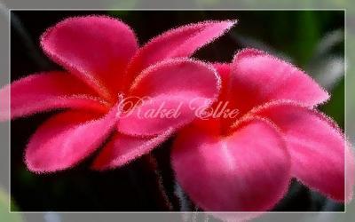 20131018160715-0flores-rosas.jpg
