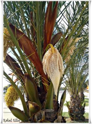 20150527234507-palmera.jpg