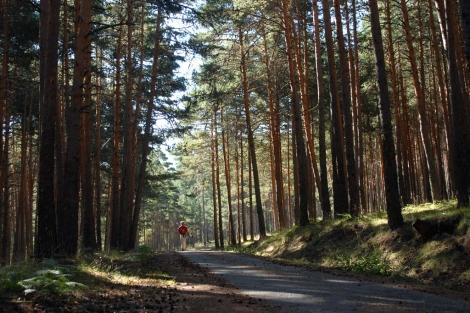 Imagen del bosque de Valsaín, nueva reserva de la biosfera
